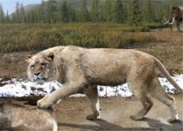 狮子是猫科动物还是犬科动物?