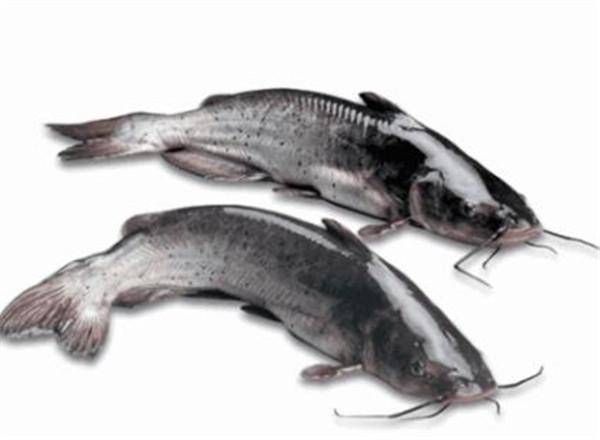 乌江鱼的做法有哪些 乌江鱼和清江鱼的区别