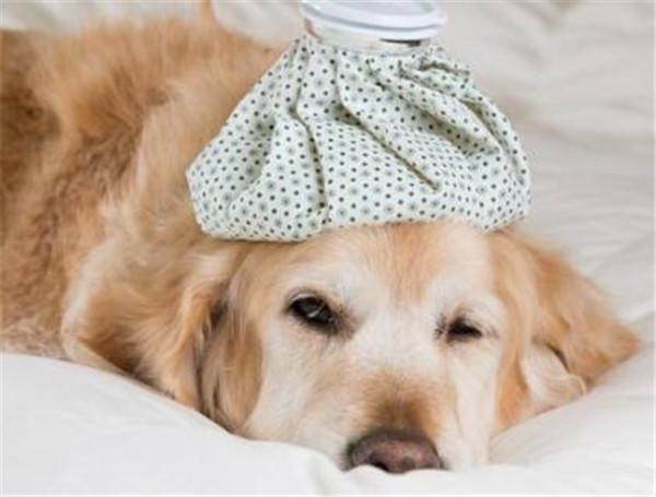 狗狗健康的表现 如何判断幼犬是否健康