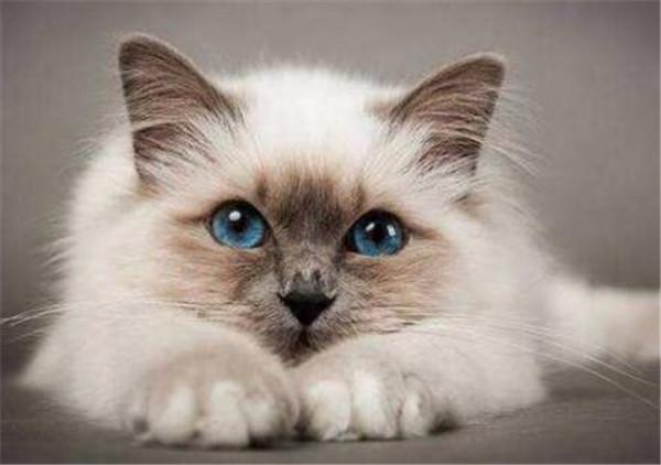 我的世界怎么驯服猫 6种方法训练幼猫