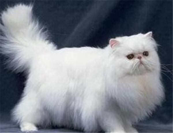 怎么确定猫认主人了 猫咪对人的信任分等级